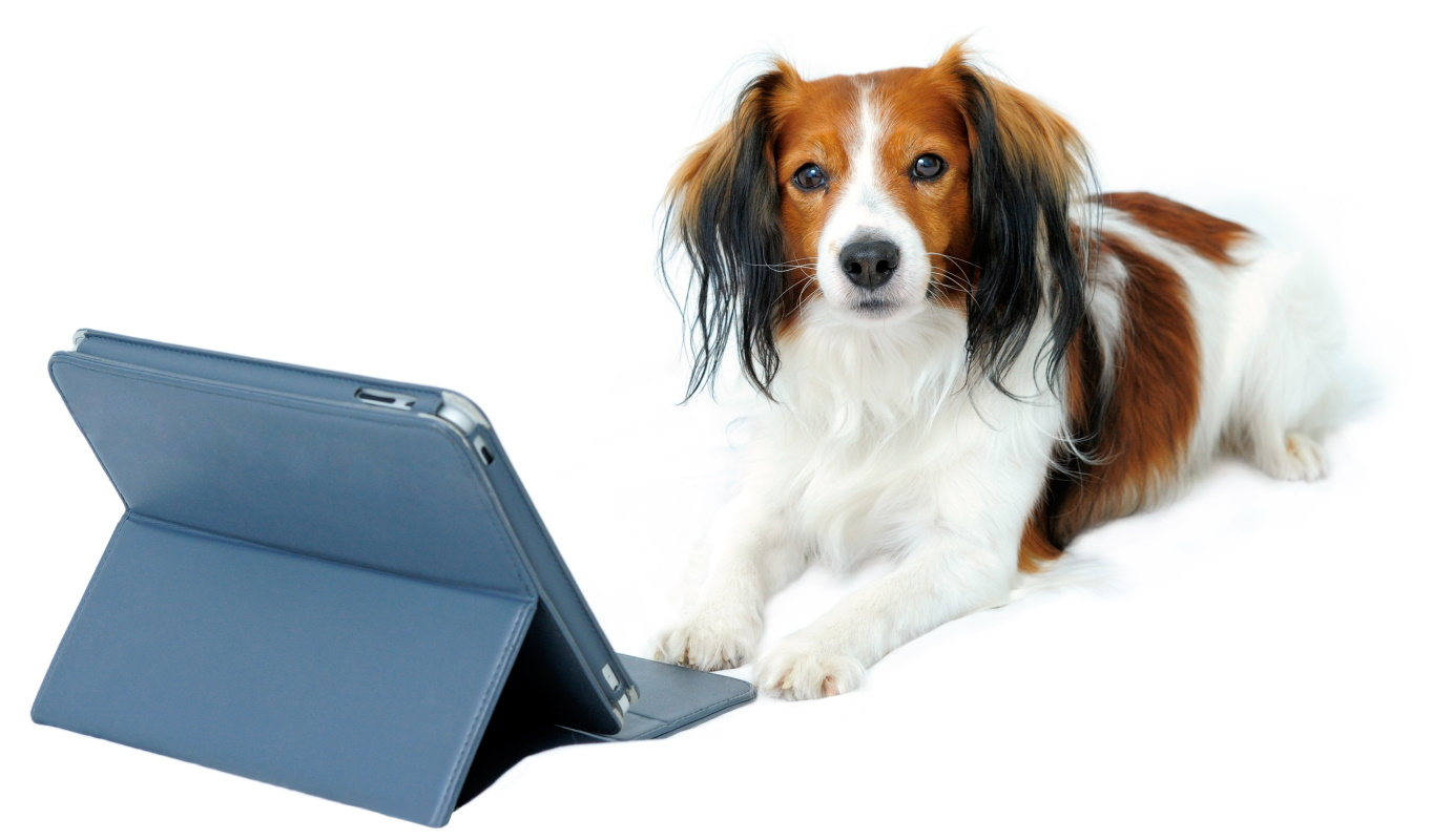 dog sitting behind a laptop